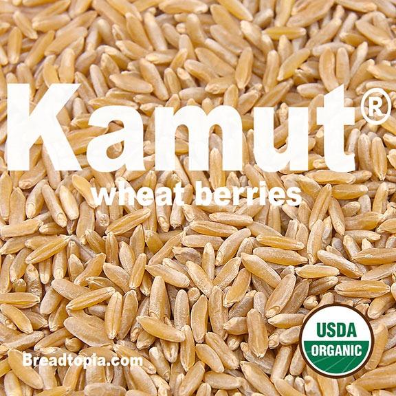 organic kamut wheat berries breadtopia
