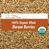 grain-organic-durum-berries-sq
