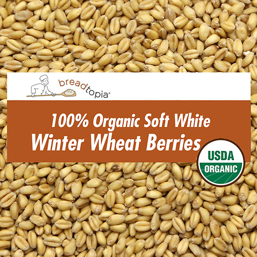 White wheat berry