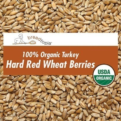 grain-organic-turkey-red-wheat-berries-sq