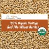 grain-organic-red-fife-wheat-berries-sq