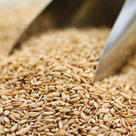 Grains, Flours & Superfoods