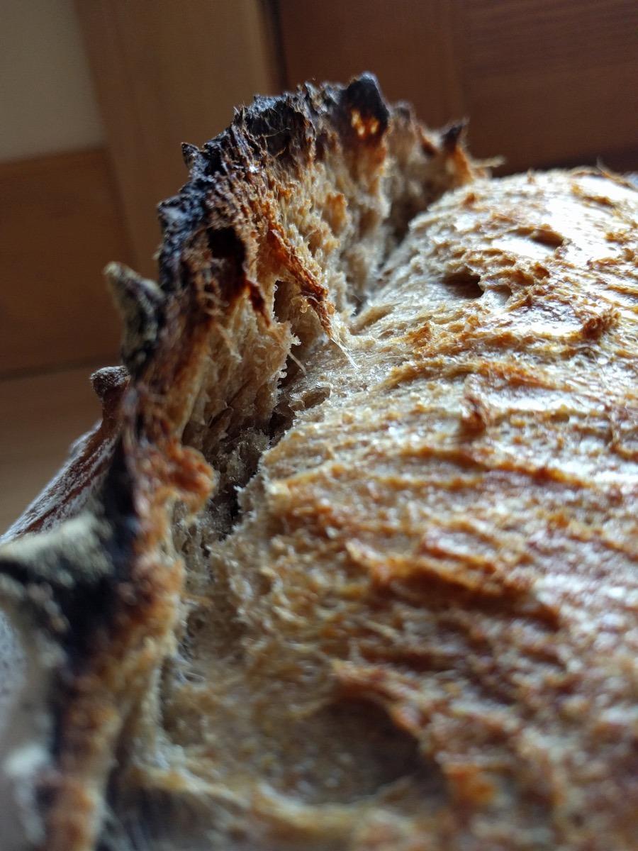Whole Grain Sourdough Rustic Country Loaf